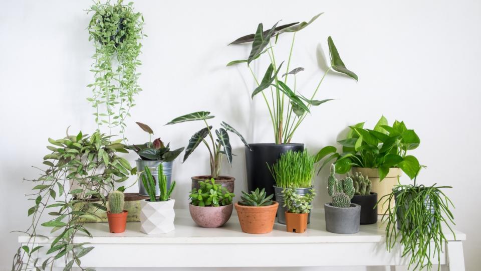 3 گیاه برتر تصفیه کننده هوا از نظر ناسا (2)
