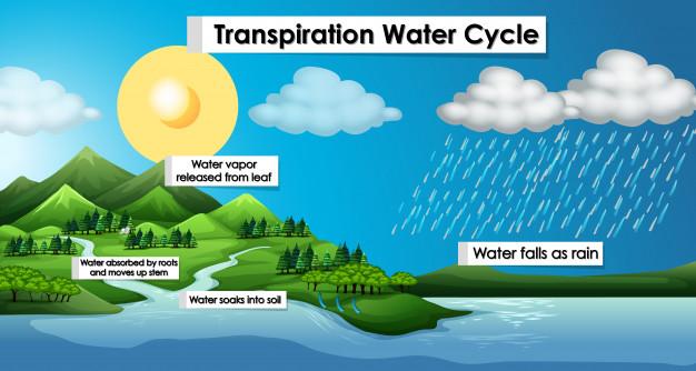 اشکال مختلف آب بر روی زمین